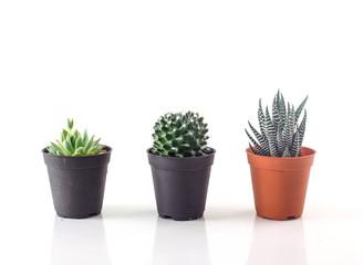 Cactus against white background