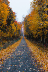 foliage, autumn, trees, aerial, road, landscape, northeast, new england, country, leaf, change, nature, yellow, orange, forest, pattern, color