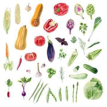 Clipboard of handpainted watercolor organic vegetable cliparts
