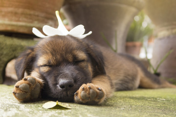 Puppy sleeping on the floor with white flower on head.