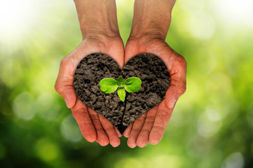 Man's hands holding heart shaped soil with growing sprout on blurred green nature bokeh background, environment concept
