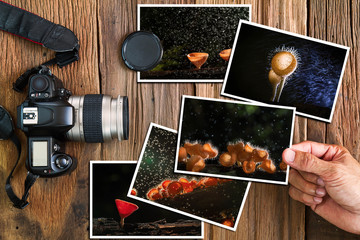 Man's hand selecting mushroom photos stack and old grunge camera on vintage grunge wooden background, photography hobby concept