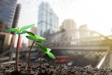 Young green sprouts growing up from soil on blurred city with soft sunlight  background, environmental concept