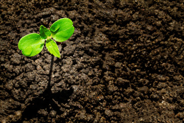 Young green sprout with water drop growing up from soil partly in shade and partly in light, environmental concept, top view