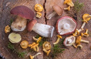 Wild fresh mushrooms on a rustic wooden table. Chanterelles, boletus, russula. Copyspace