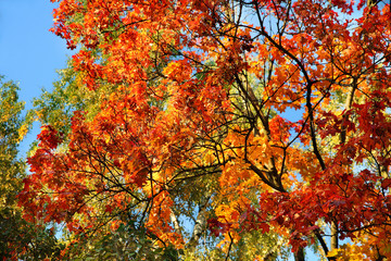 Colorful autumn background sky and trees