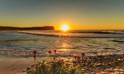 Sunrise Seascape and Sunburst with Aloe Vera