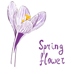 Flower of saffron