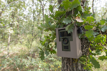 animal tracking camera attached to a tree