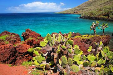 Galapagos prickly pear on Rabida Island in Galapagos National Park, Ecuador.