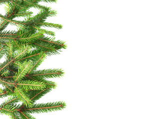 Branches of fir tree on white background