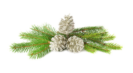 Branches of fir tree and cones on white background