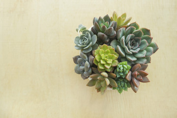 Top view flowering  succulent plants pot on wooden table