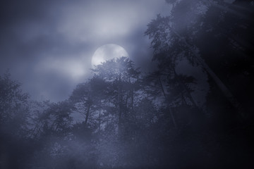Woods in a foggy full moon night