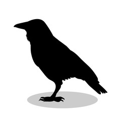 Raven bird  black silhouette animal