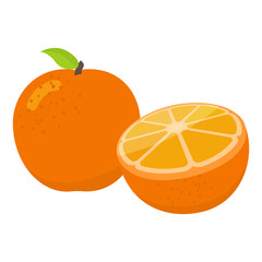 Oranges cartoon illustration