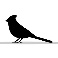 Cardinal bird black silhouette animal