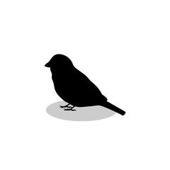 Sparrow bird black silhouette animal