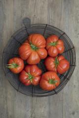 Basket of fresh picked heirloom tomatoes in wire basket
