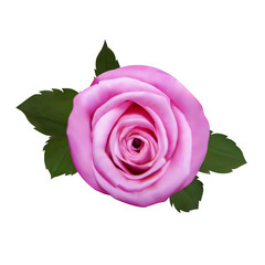 Realistic rose, vector illustration