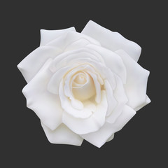 Realistic white rose, vector illustration