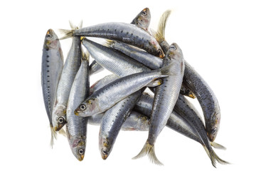Fish mackerel in group on white background