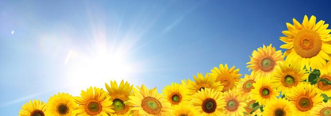 Wunderschöne Sonnenblumen
