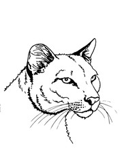 Graphical  sketch portrait of puma on white, tattoo, logo