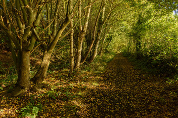 Footpath in the autumn forest