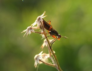 An insect macro photography on a flower
