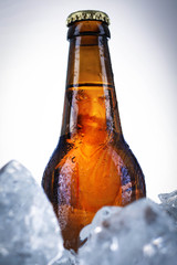 Beer in bottle. Close up. White background