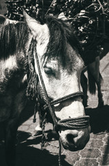 Portrait of a sad donkey in countryside Guatemala in the remote village San Juan La Laguna.