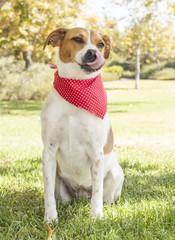 Beagle Mix Portrait