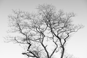 Monochrome of dry tree in winter.