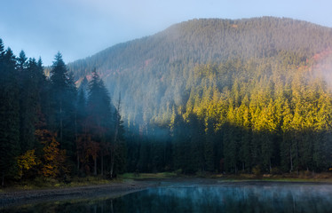 coniferous forest in fog around the mountain lake