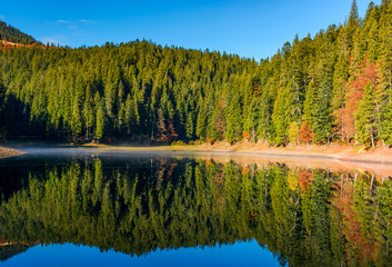 coniferous forest with lake in mountains