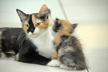 Cat mom with kitten together