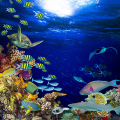 colorful wide underwater coral reef square banner background with many fishes turtle and marine life / Unterwasser Korallenriff Hintergrund quadratisch