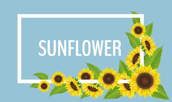 Sunflower frame with corner flower decoration, with leaf, on blue background with white border frame. Summer decoration, realistic vector illustration.