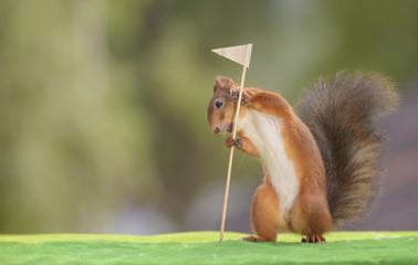 squirrel  holding a Golf Flag