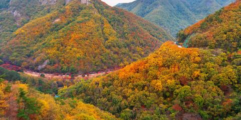 Wall Mural - Autumn leaves in autumn park.