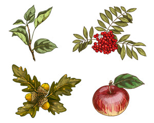 Set of autumn fruits and leaves isolated on white background. Vector Illustration