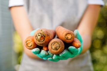 Carrot in hands of girl