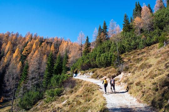 Pokljuka, Slovenia - Oktober 31, 2015: Hikers on the path to Bled mountain hut at Lipanca, Julian Alps,
