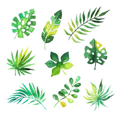 Tropical leaves set, jungle trees, botanical watercolor vector Illustrations