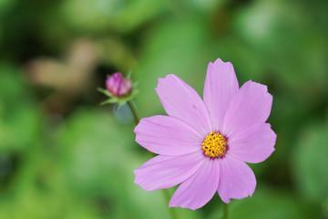 bright flower background