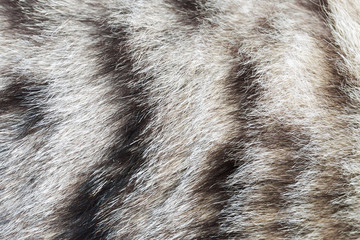 texture striped cat fur, wool close up
