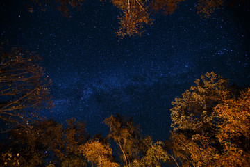 Dark blue night starry sky above the mystery autumn forest with orange and yellow trees. Long exposure photo of milky way stars in the woods. Astronomy concept and background