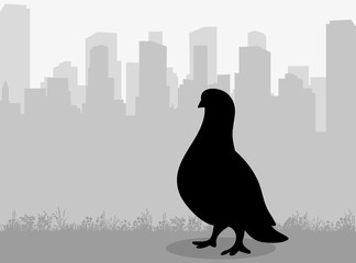 Vector, isolated silhouette of a dove