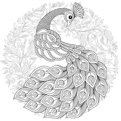 Peacock in zentangle style. Adult antistress coloring page.